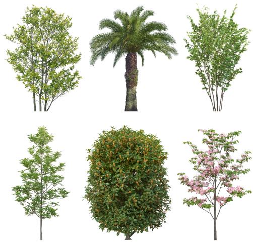 豊富なデータからイメージ通りの木が見つかる!